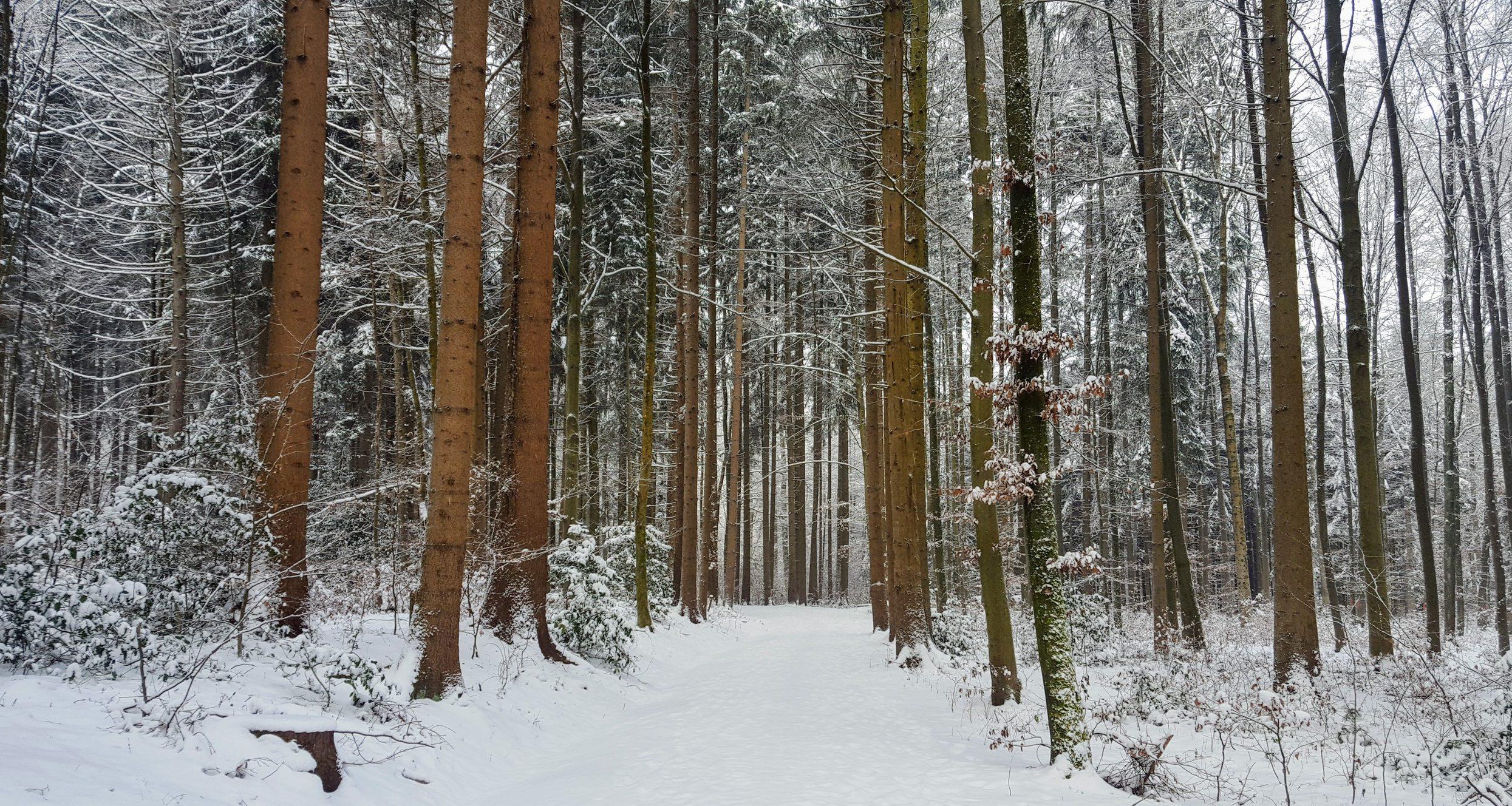 Ich seh den Wald vor lauter Bäumen nicht mehr