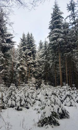 Ist der Winter nicht zauberhaft?