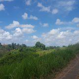 Ubud: von Reisfeldern, Affen und einem Marktbesuch